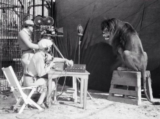 Jackie, the MGM Lion, Hollywood 1929