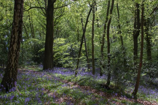 Quot A Walk In Bluebell Wood Quot Durham City England Trending