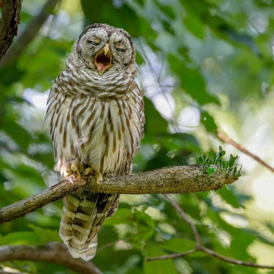 Owl of the evening photo!! Aaaaaaaaaaahhhhhhhhhh!!!!!