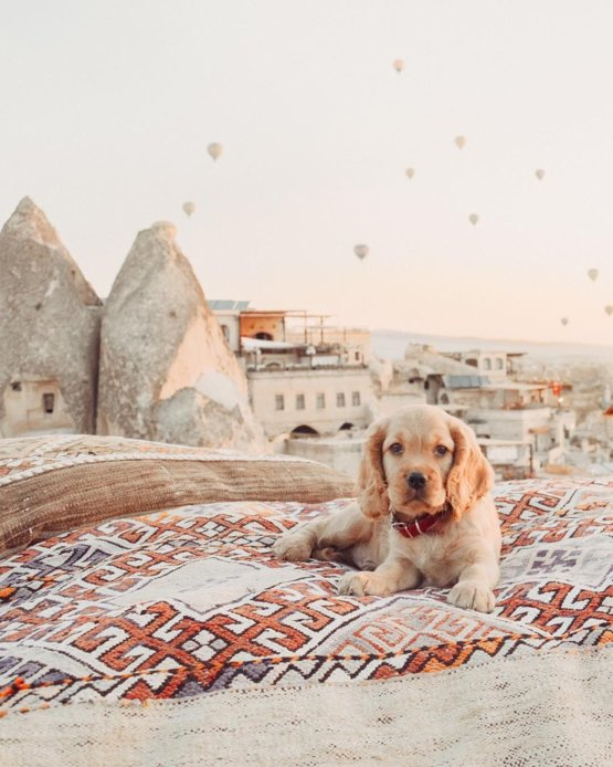 Hot Air Balloons in Cappadocia, Turkey ????????
