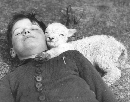 """"""" Newly-born lamb snuggles up to a boy, 1940  relationship goals"""