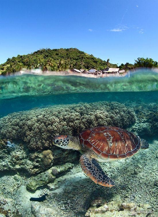 Sea Turtle, The Philippines