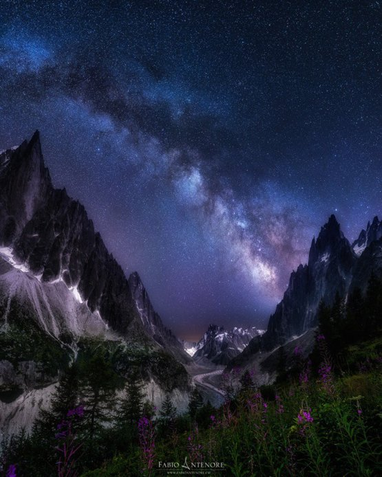 Night Flowers photography by Fabio Antenore