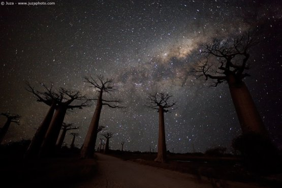Baobab Avenue and Milky Way photography by Juza