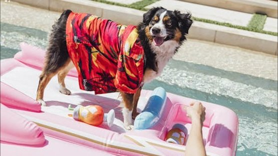 Are you going to buy your dog a doggie pool float this summer #SummerVibes