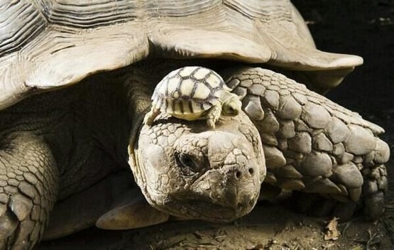 140 year old mom, with 5 day old son.