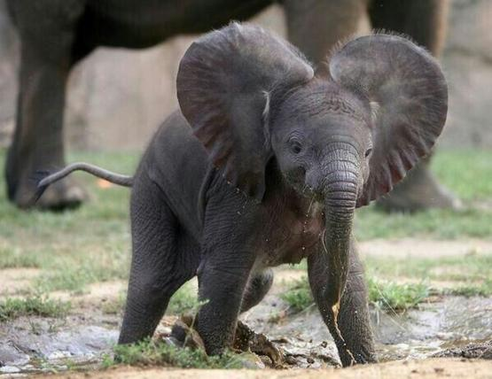 Happiest Little Elephant Ever