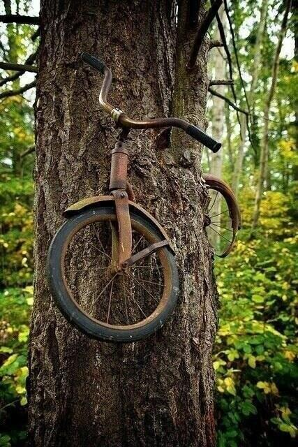 In 1914, a boy chained his bike to a tree to fight in the war. He never returned?