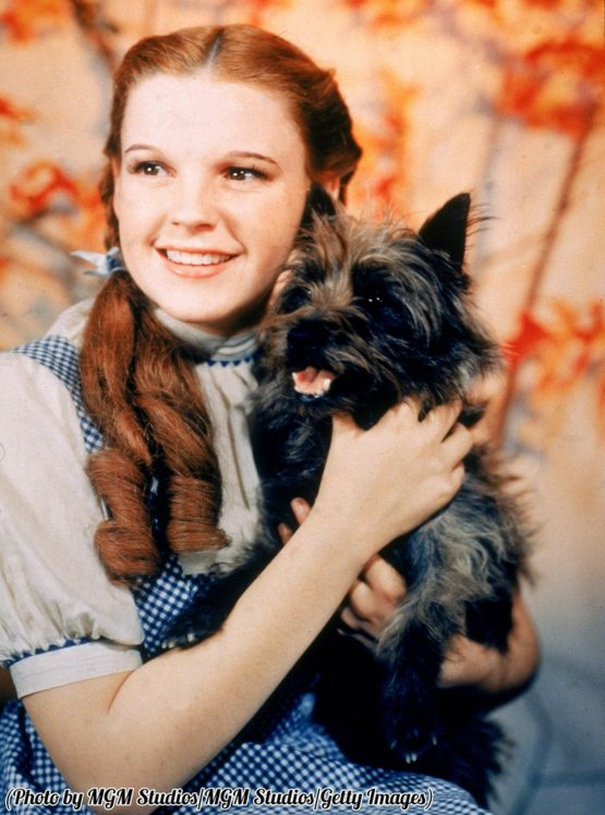 A 16-year-old Judy Garland as Dorothy Gale, holding Toto, 1939.
