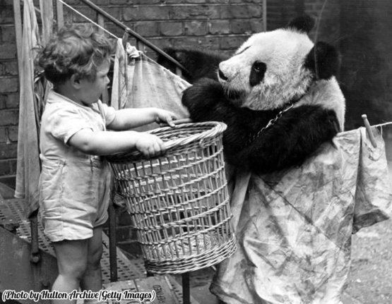 A panda discussing the problems of the day over the washing line with a young admirer, 1939.
