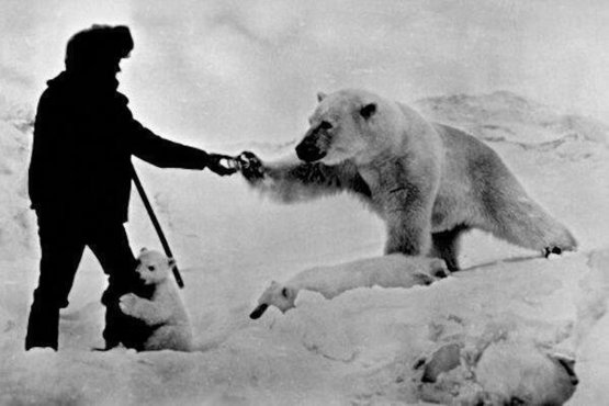 Astonishing photo showing a man feeding a polar bear and his cubs with milk, Russia, late 1970s