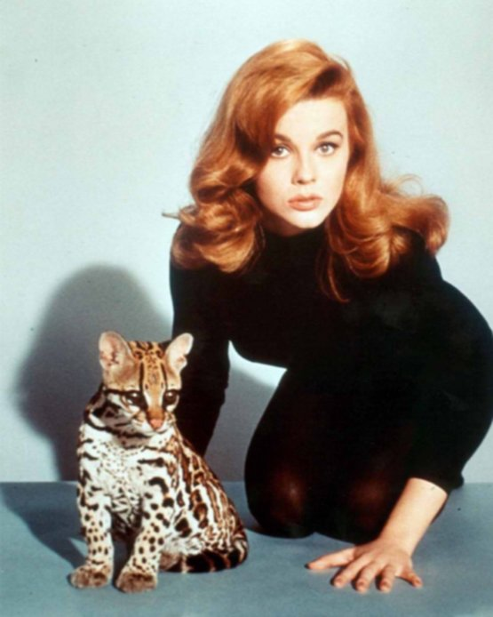 Ann Margaret and an Ocelot, circa 1960s.