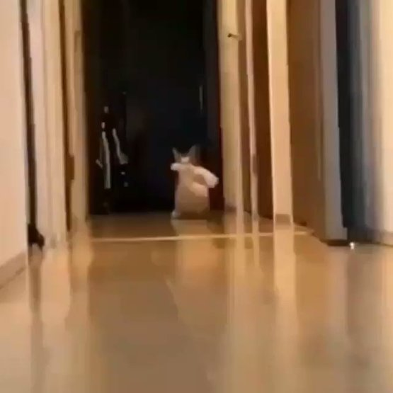 I laughed my A** off after seeing this clip.Thats why I love cats????????,,