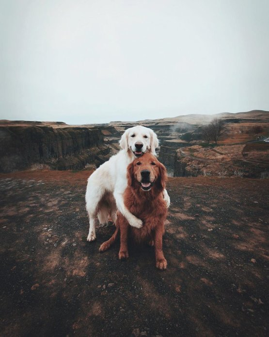 Life is better with a travel buddy.