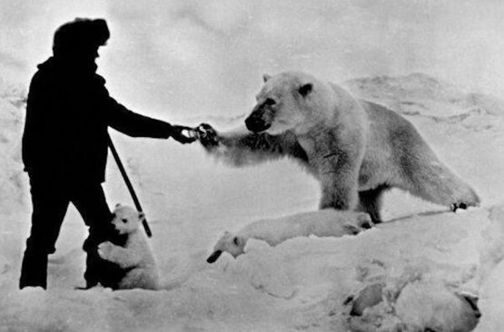 Astonishing photo showing a man feeding a polar bear and his cubs with milk. Russia, late 1970s.