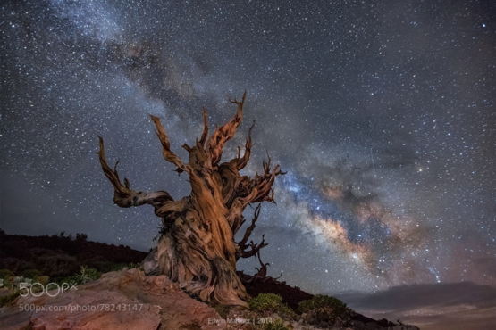 Sentinel of Time by Edwin Martinez