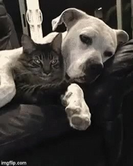 Cat and dogs behaving #SupportAnimalHospitals