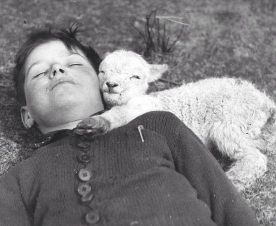 Newly-born lamb snuggles up to a boy, 1940