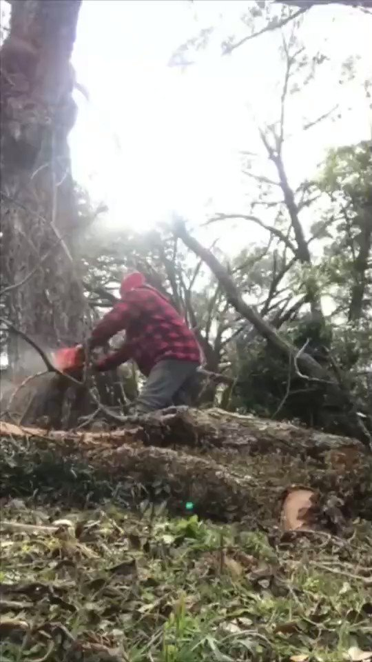 Perfect Revenge by Tree.
