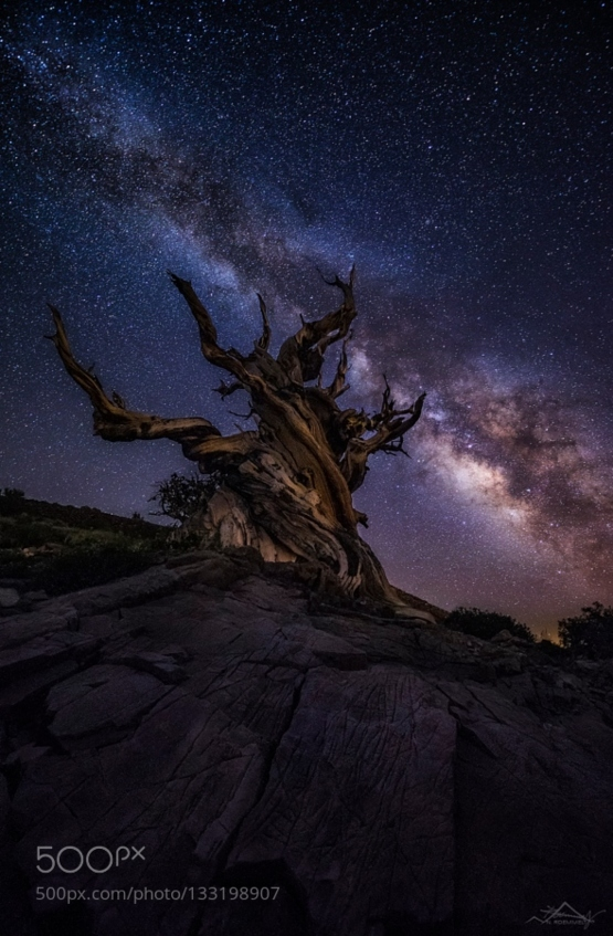 Methuselah by lightpix