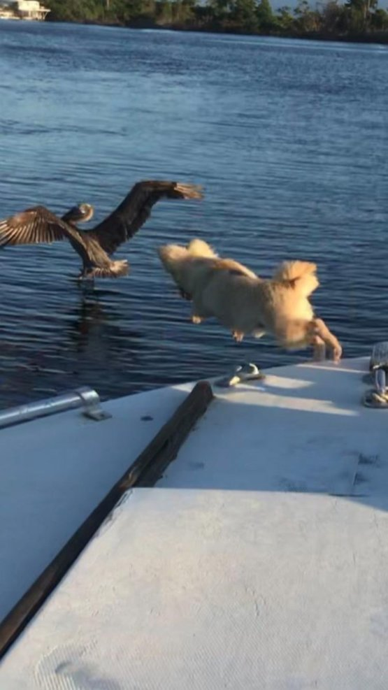 Look my buddy trying to fly!