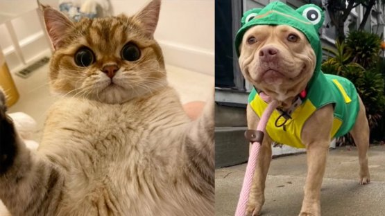 Just some adorable pets to brighten up your feed
