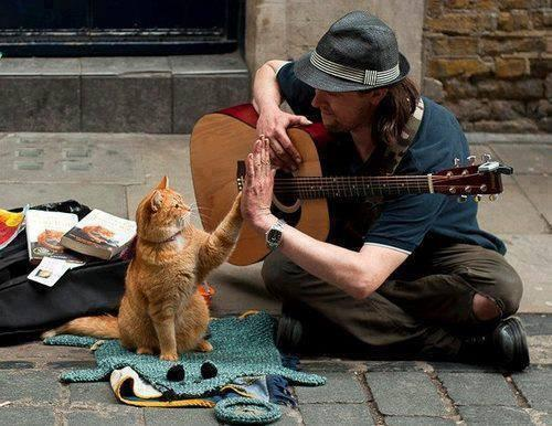 """I love this pic  #reallife.   """" A Street Cat Named Bob"""