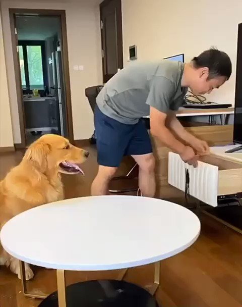 This dog is too smart for us all